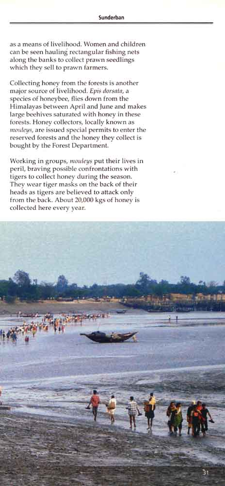 Wild Trail in Bengal 18th page